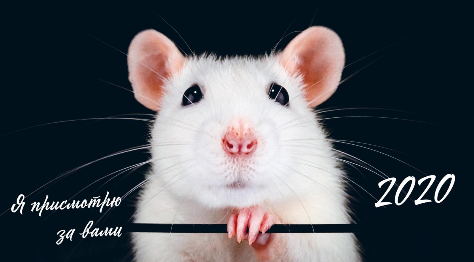 этих прикольные картинки года белой крысы почему-то именно этот