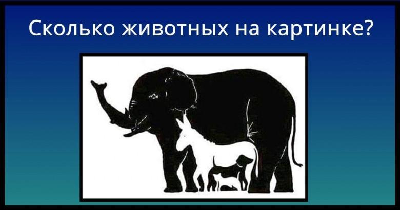 главное сколько животных видишь на картинке ответ очень