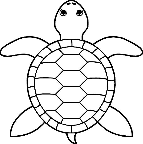 Раскраска «Черепаха». №160822