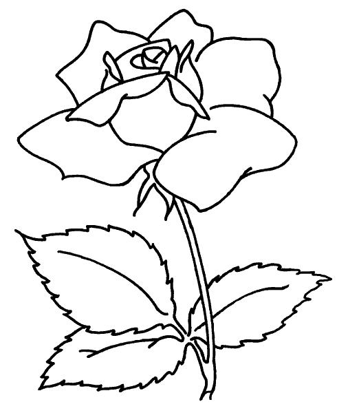 Раскраска «Роза». №37148