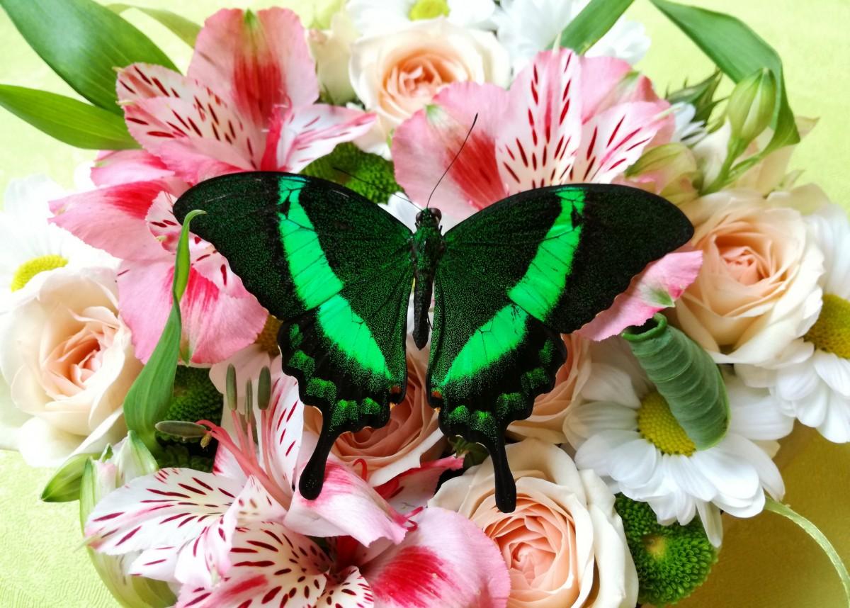 Пазл Собирать пазлы онлайн - Бабочка и букет