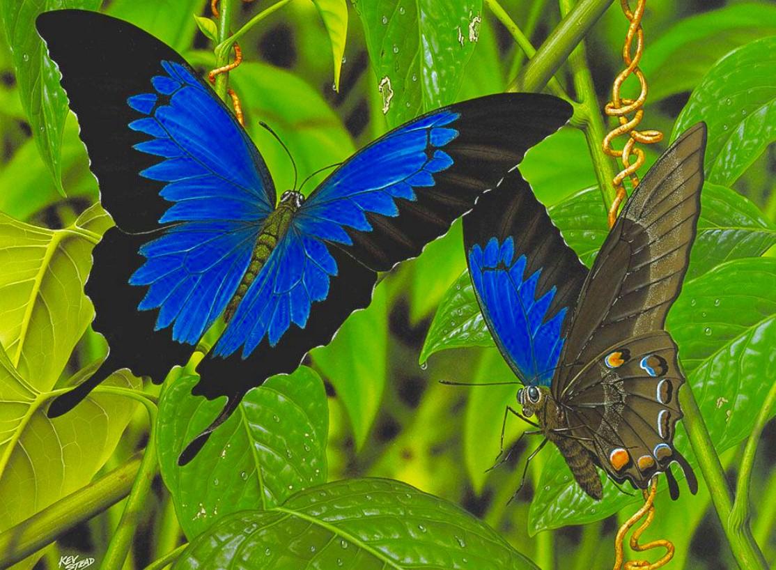 Пазл Собирать пазлы онлайн - Бабочка парусник