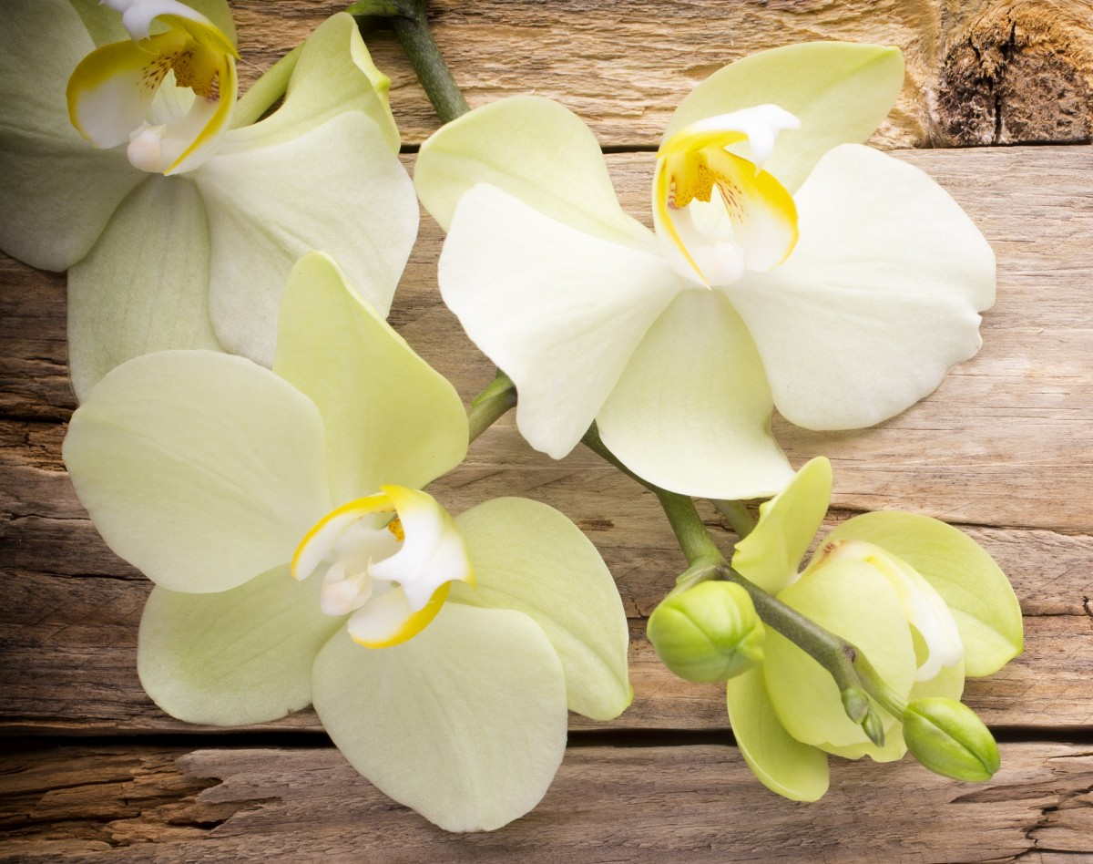 Пазл Собирать пазлы онлайн - Белые орхидеи