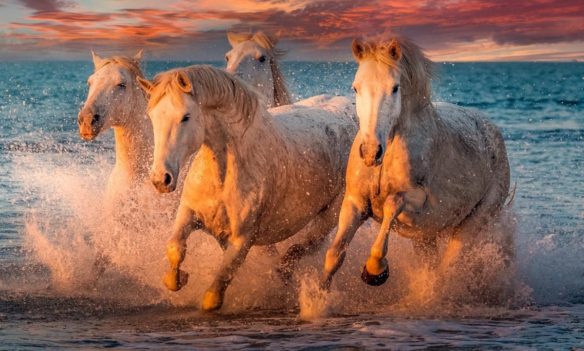 Пазл Собирать пазлы онлайн - Четыре коня