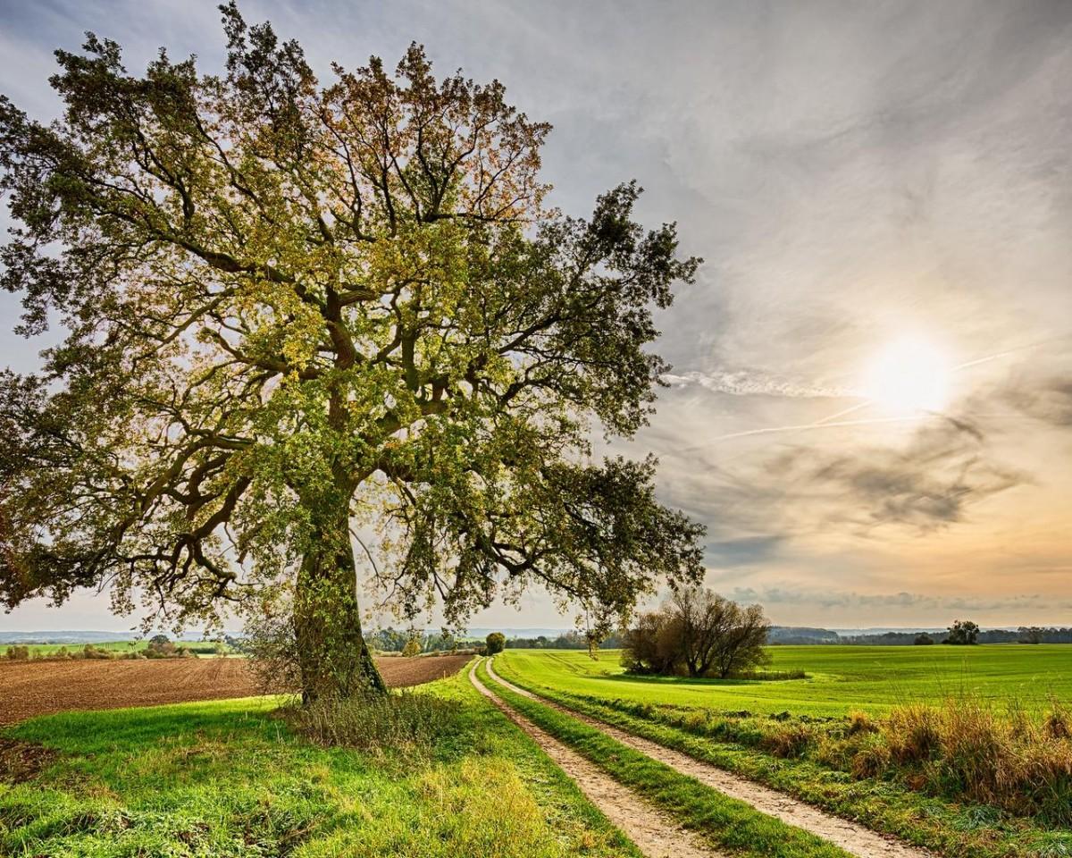Пазл Собирать пазлы онлайн - Дерево у дороги