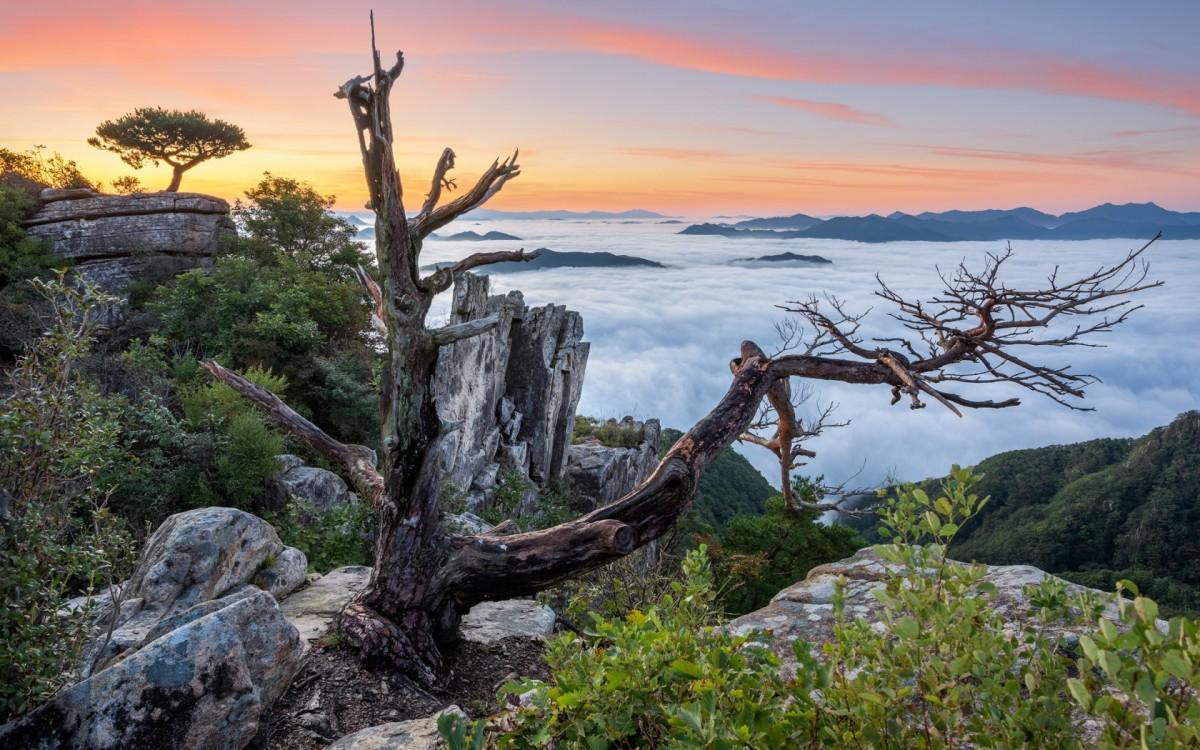 Пазл Собирать пазлы онлайн - Дерево в горах