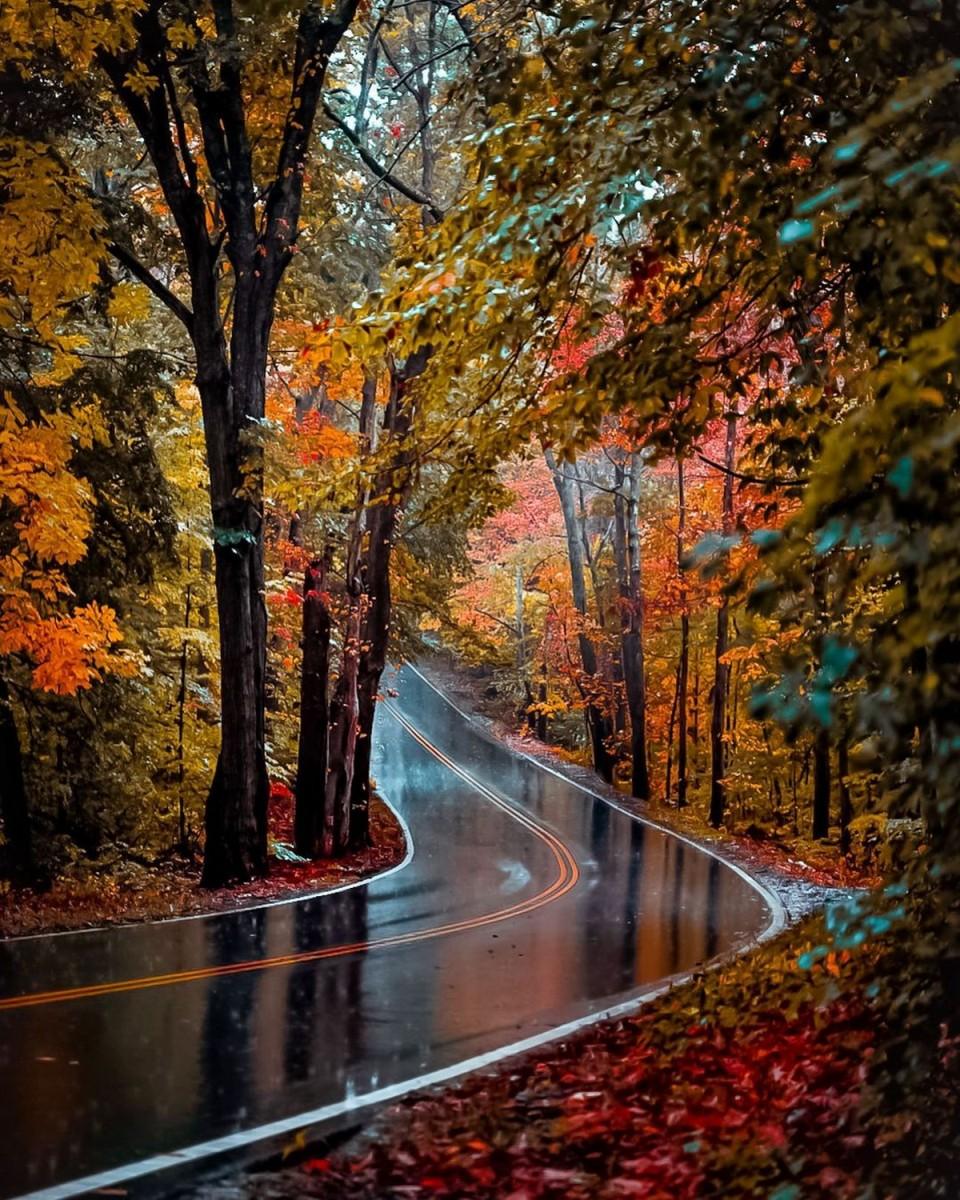 Пазл Дорога в осеннем лесу