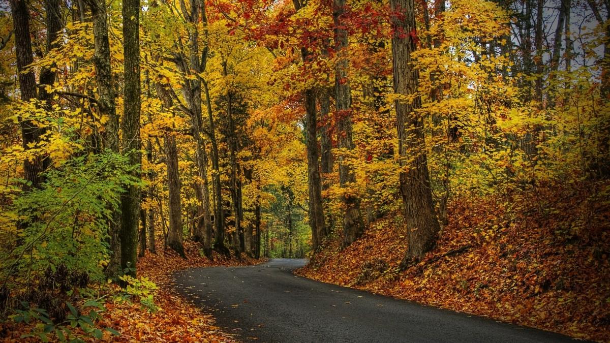 Пазл Собирать пазлы онлайн - Дорога в осенний лес