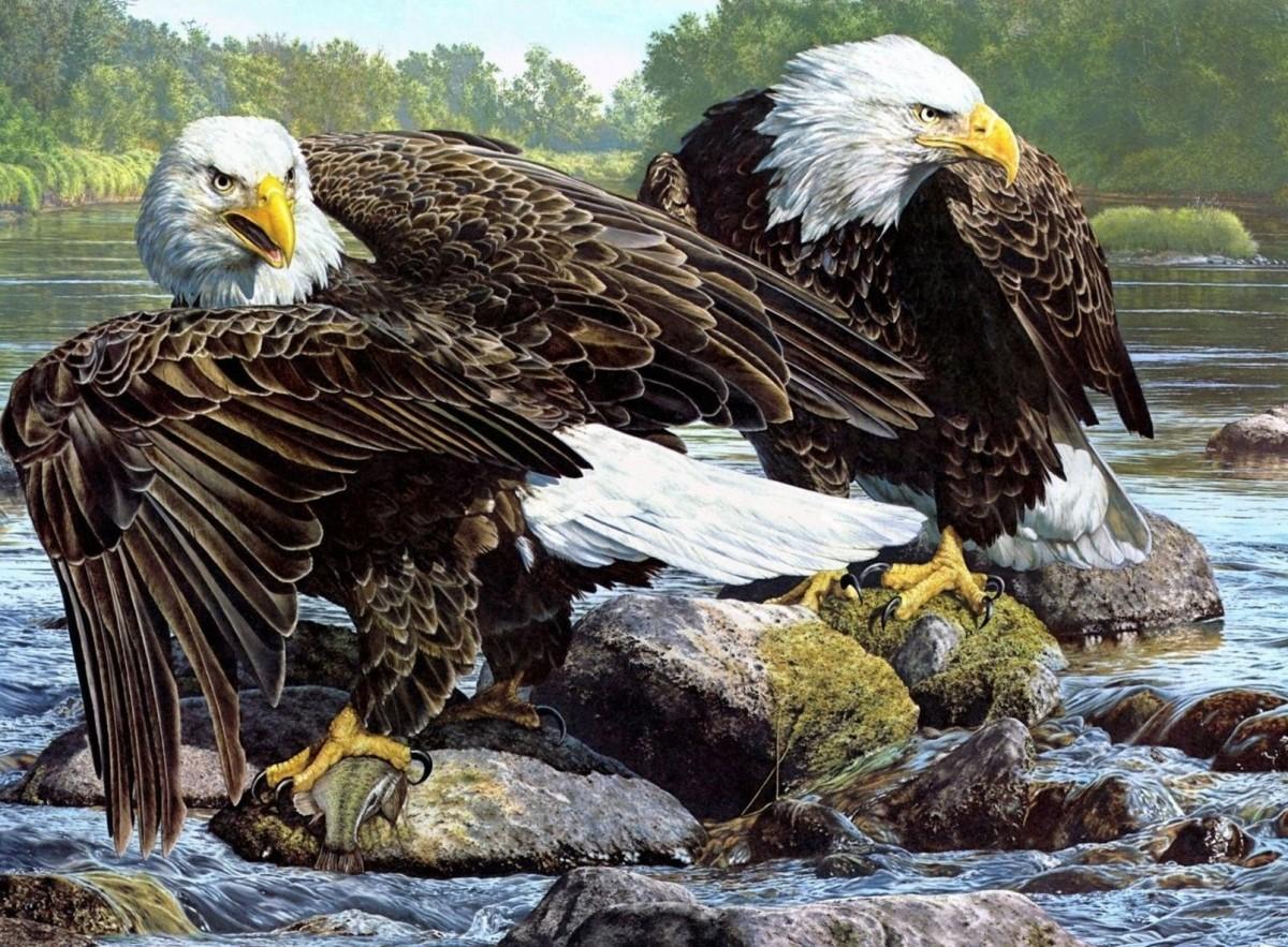 Пазл Собирать пазлы онлайн - Два орла