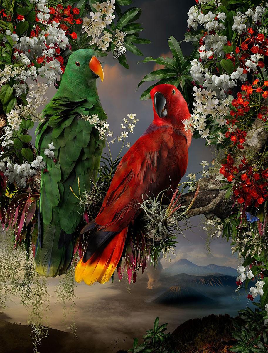 Пазл Собирать пазлы онлайн - Два попугая