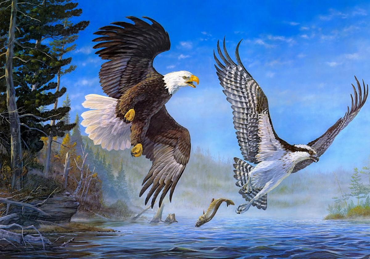 Пазл Собирать пазлы онлайн - Две птицы
