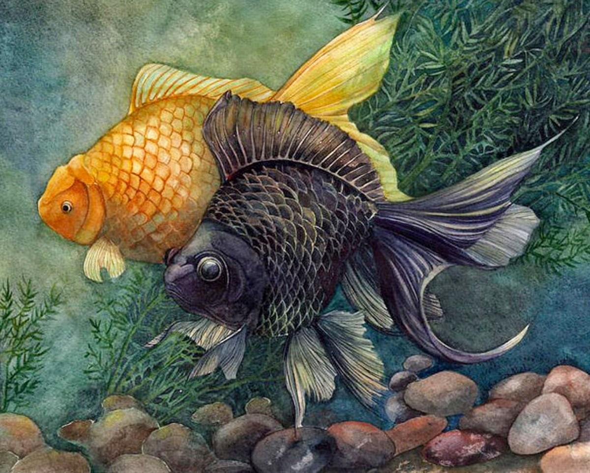 Пазл Собирать пазлы онлайн - Две рыбки