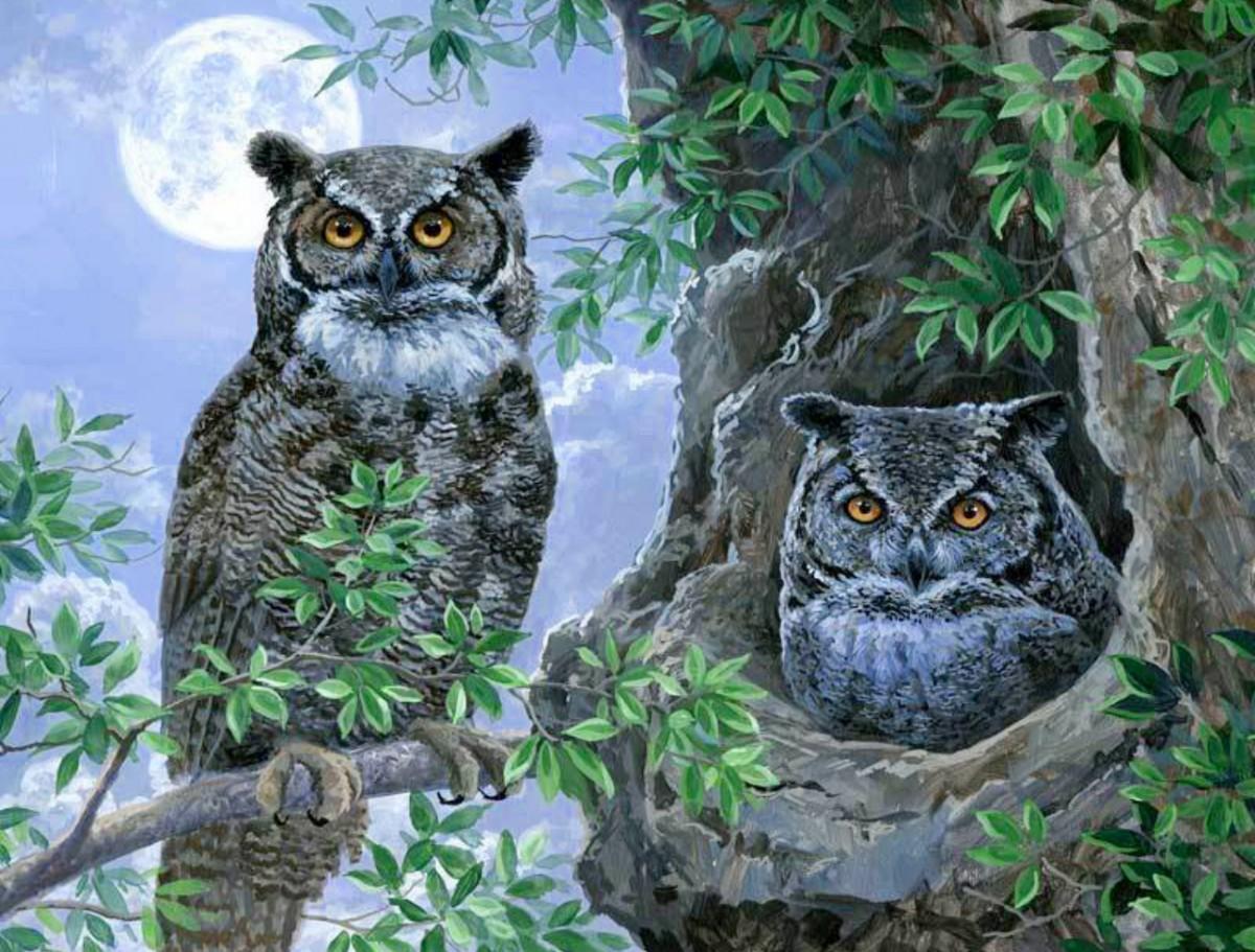 Пазл Собирать пазлы онлайн - Две совы