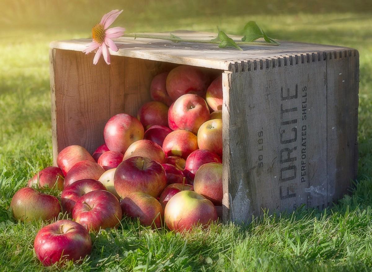 Пазл Собирать пазлы онлайн - Эхинацея и яблоки