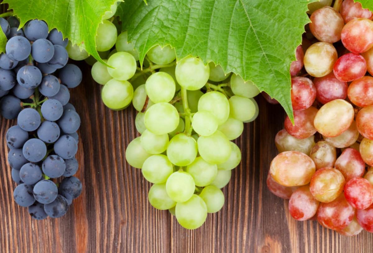 Пазл Собирать пазлы онлайн - Гроздья винограда