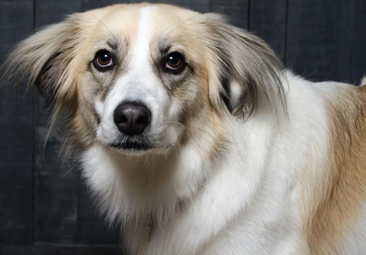 Пазл Собирать пазлы онлайн - Грустный пёс