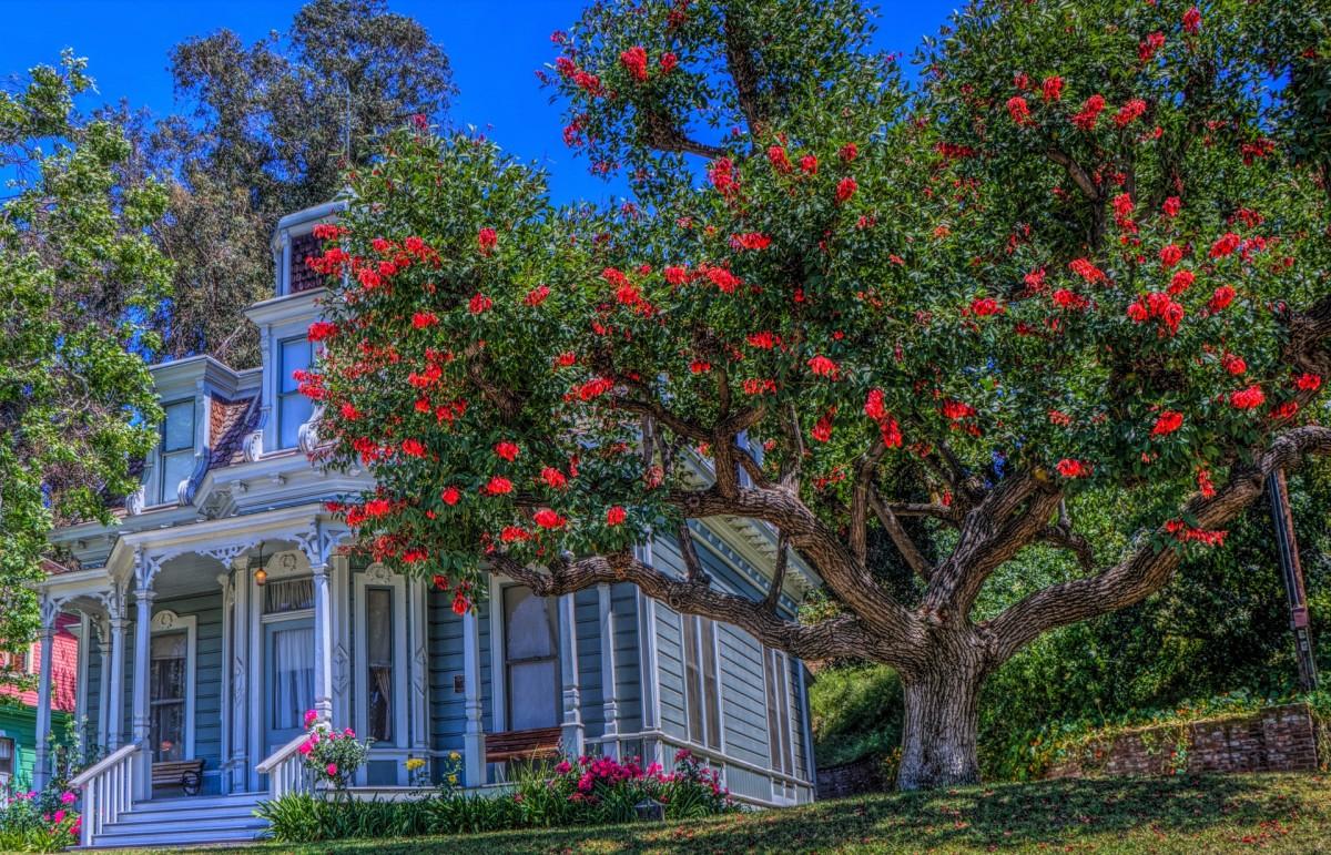 Пазл Собирать пазлы онлайн - Калифорнийский дом