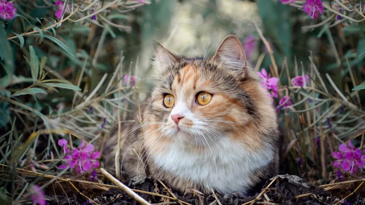 Пазл Собирать пазлы онлайн - Кошка в цветах