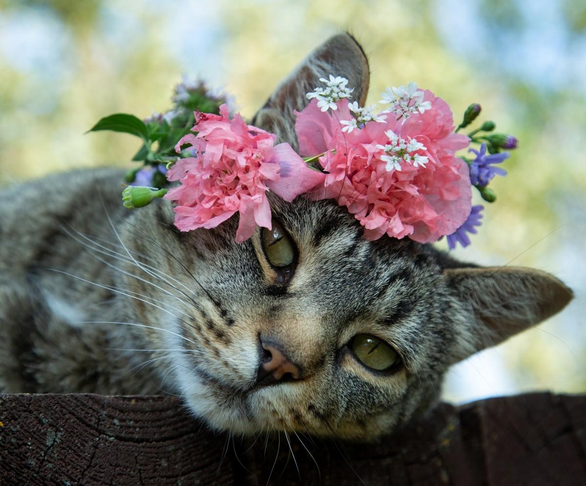 Пазл Собирать пазлы онлайн - Кошка в венке