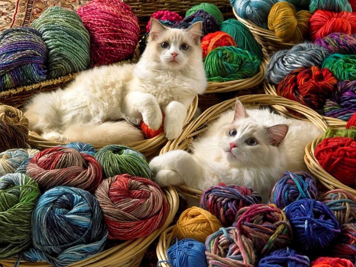Пазл Собирать пазлы онлайн - Кошки и клубки