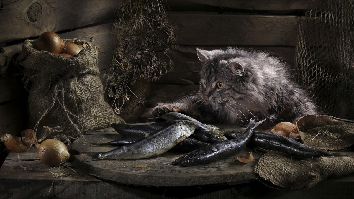 Пазл Собирать пазлы онлайн - Кот и селёдка