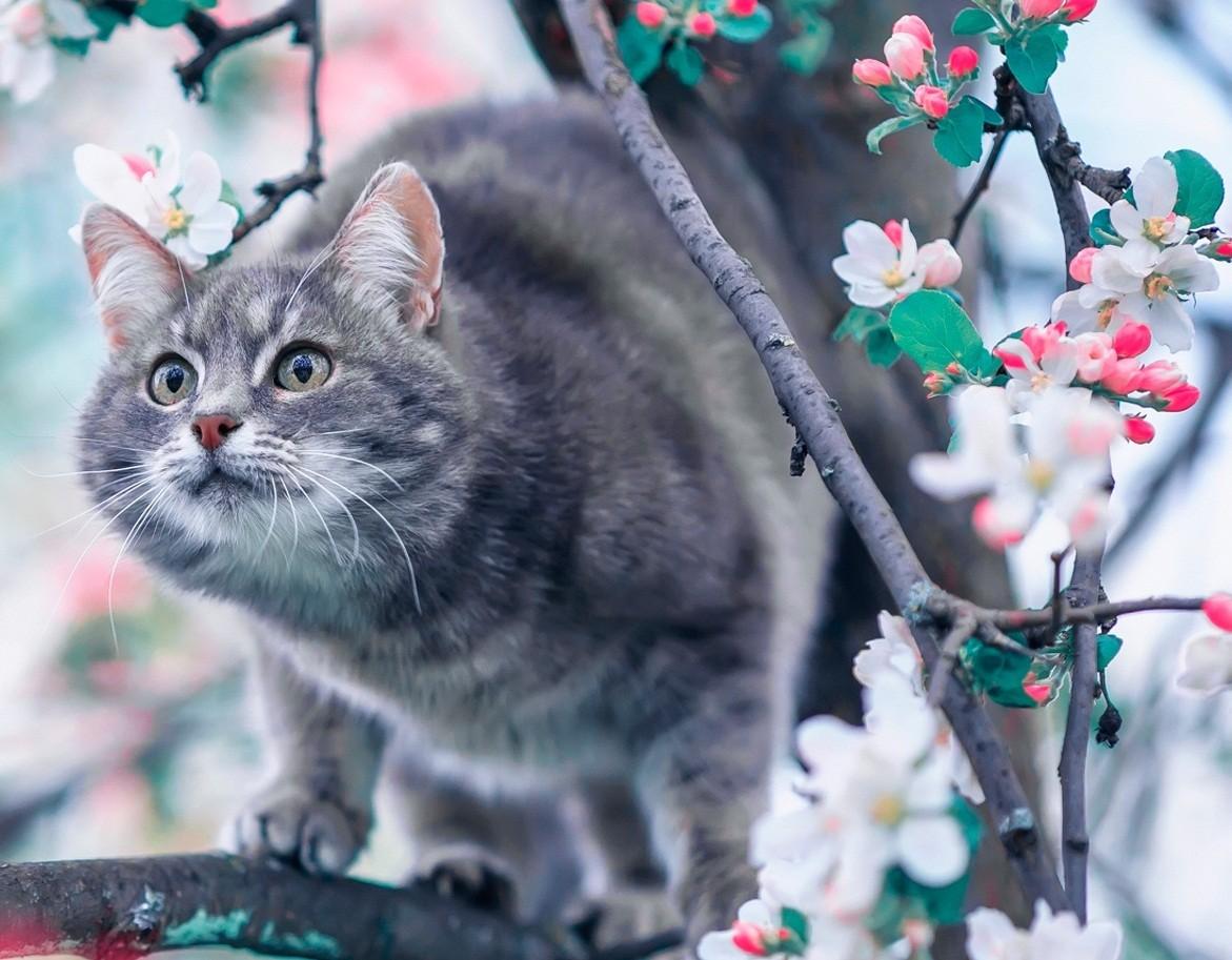 Пазл Собирать пазлы онлайн - Кот на яблоне