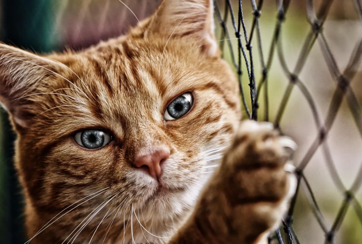 Пазл Собирать пазлы онлайн - Кот у решётки