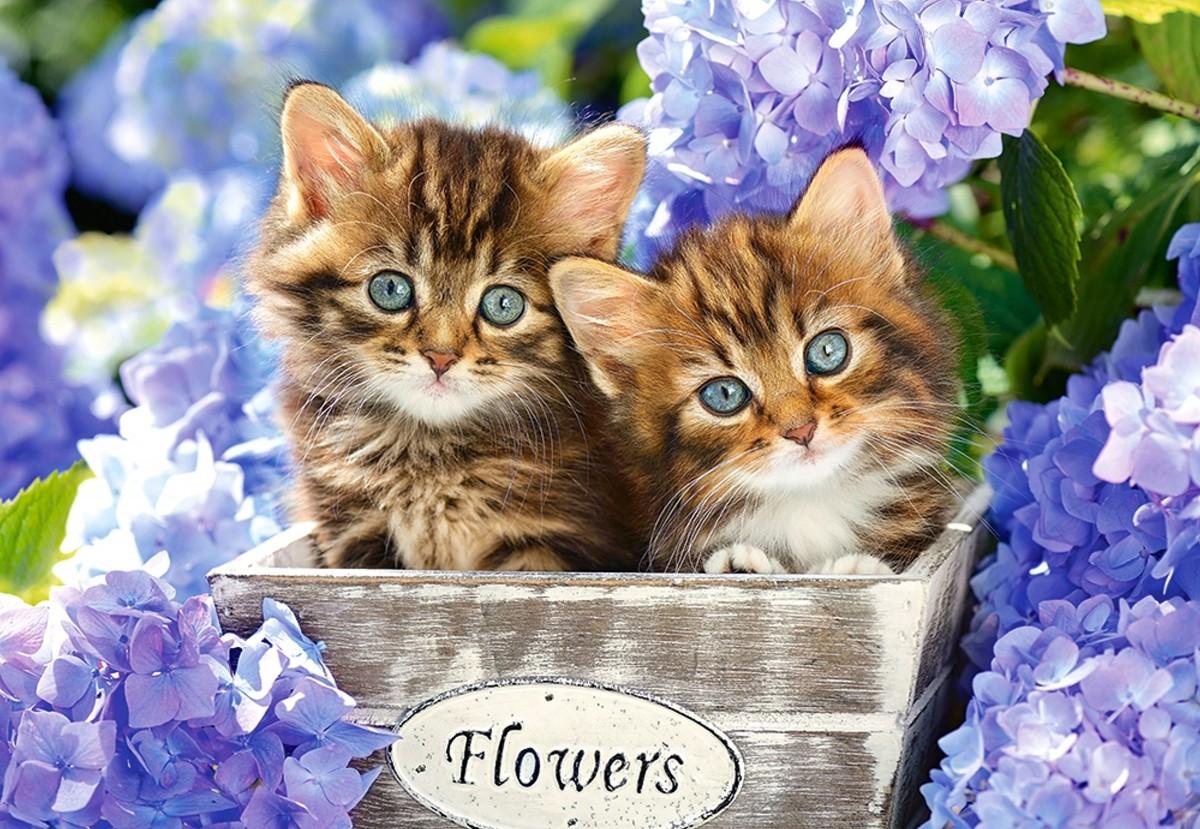 Пазл Собирать пазлы онлайн - Котята и цветы