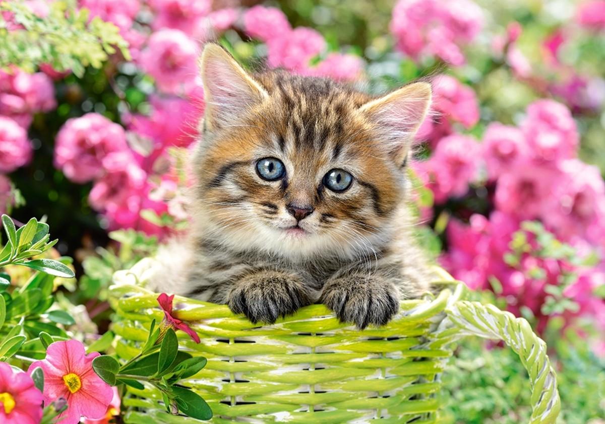 Пазл Собирать пазлы онлайн - Котёнок в саду