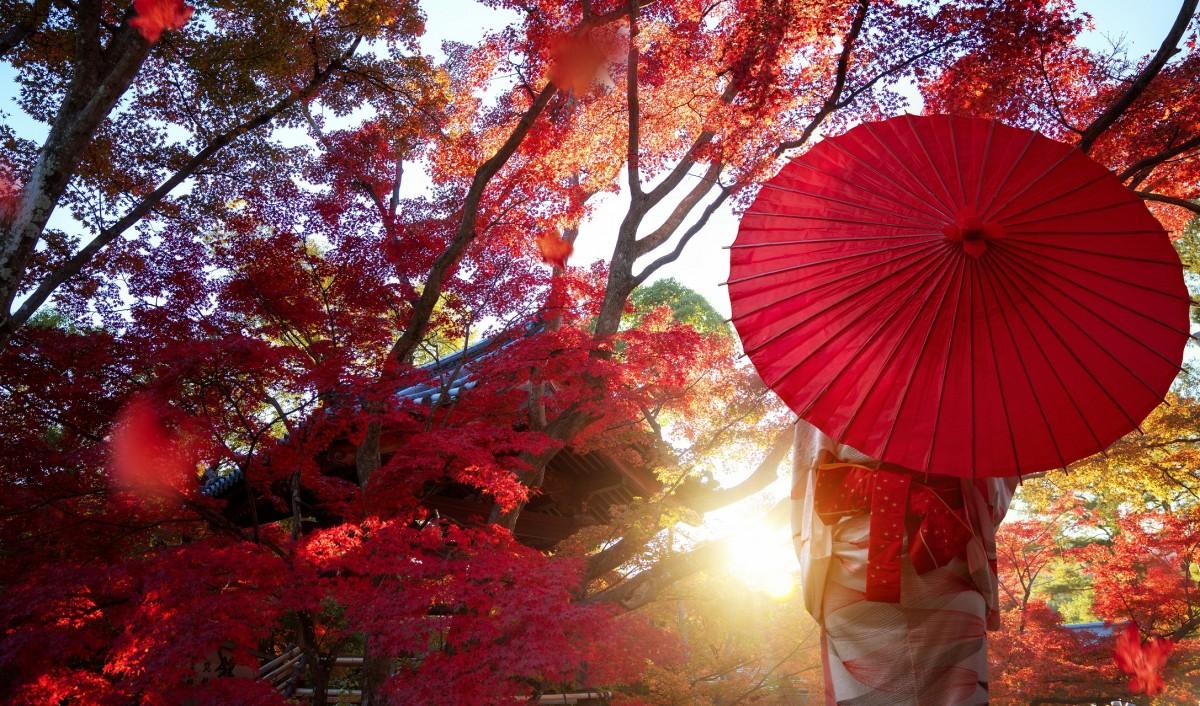 Пазл Собирать пазлы онлайн - Красный зонт