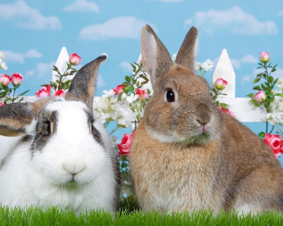 Пазл Собирать пазлы онлайн - Кролики