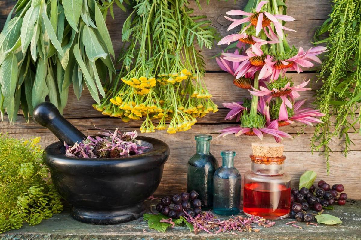 Пазл Собирать пазлы онлайн - Лекарственные травы