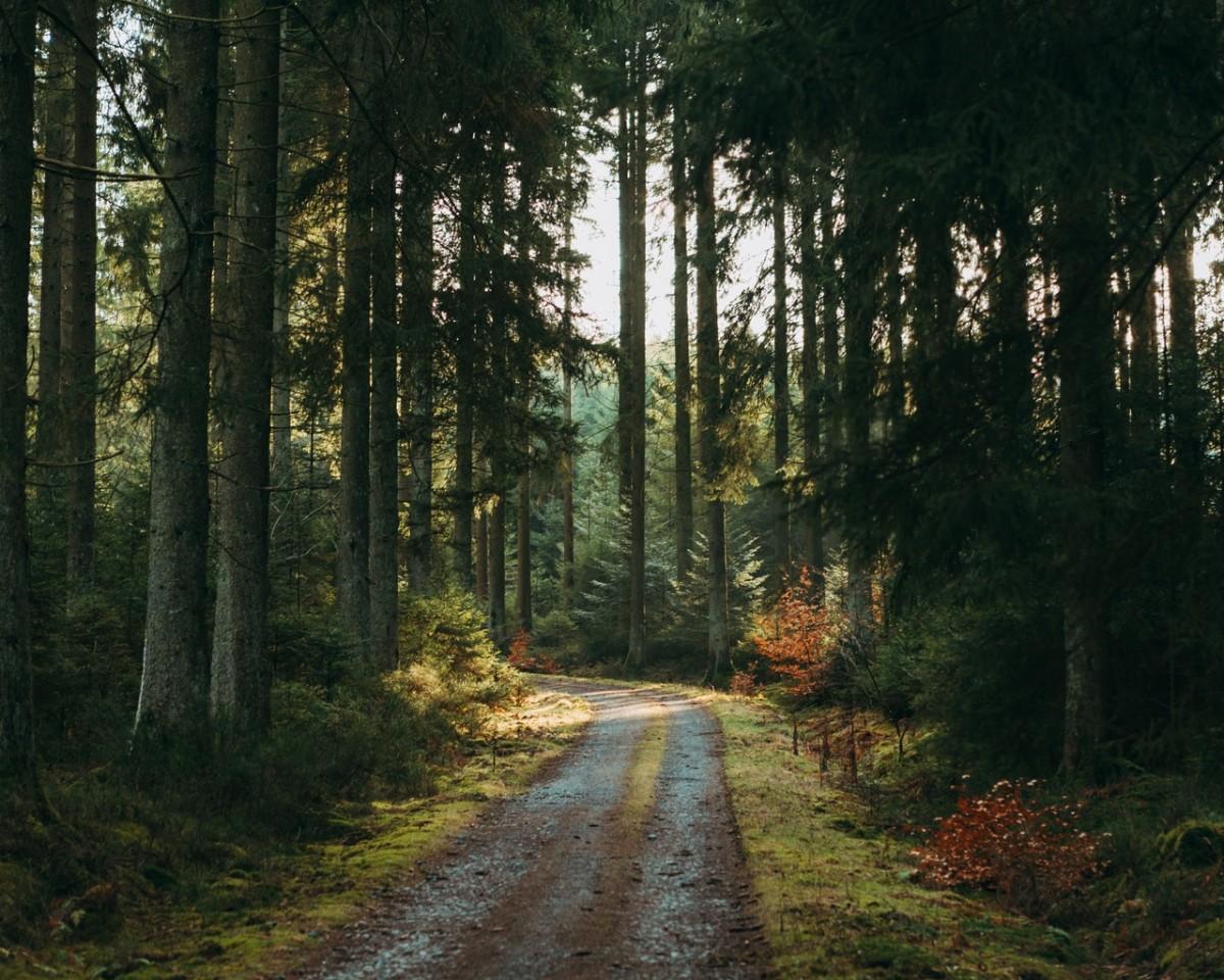 Пазл Собирать пазлы онлайн - Дорога в лесу