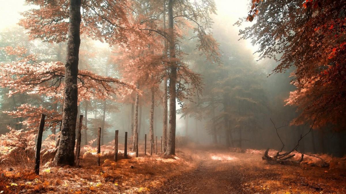 Пазл Собирать пазлы онлайн - лес