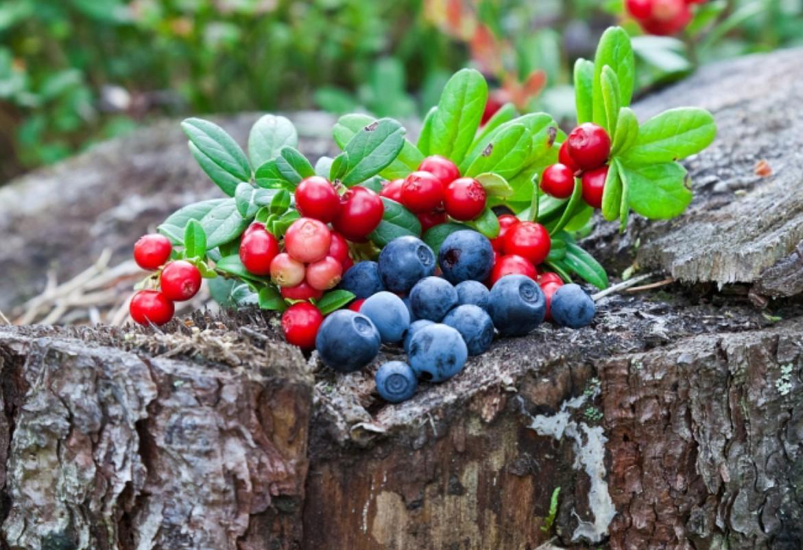 Пазл Собирать пазлы онлайн - Лесные ягоды
