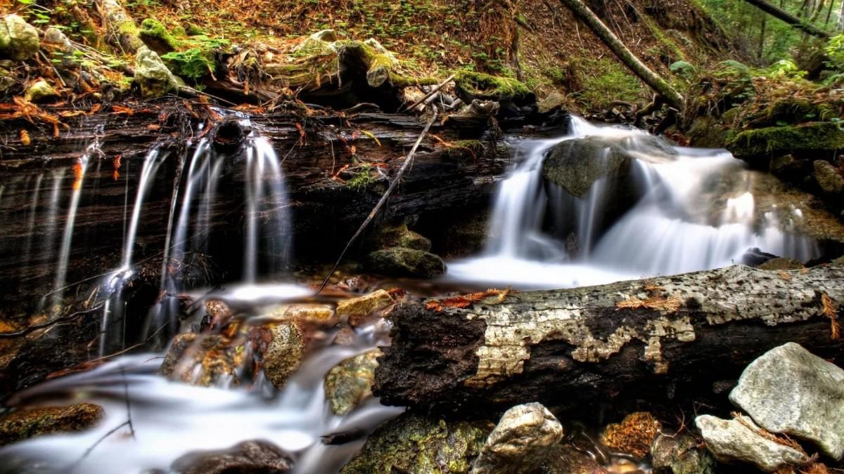 Пазл Собирать пазлы онлайн - Лесной ручей