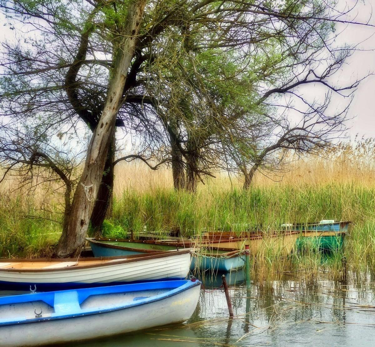 Пазл Собирать пазлы онлайн - Лодки под деревьями