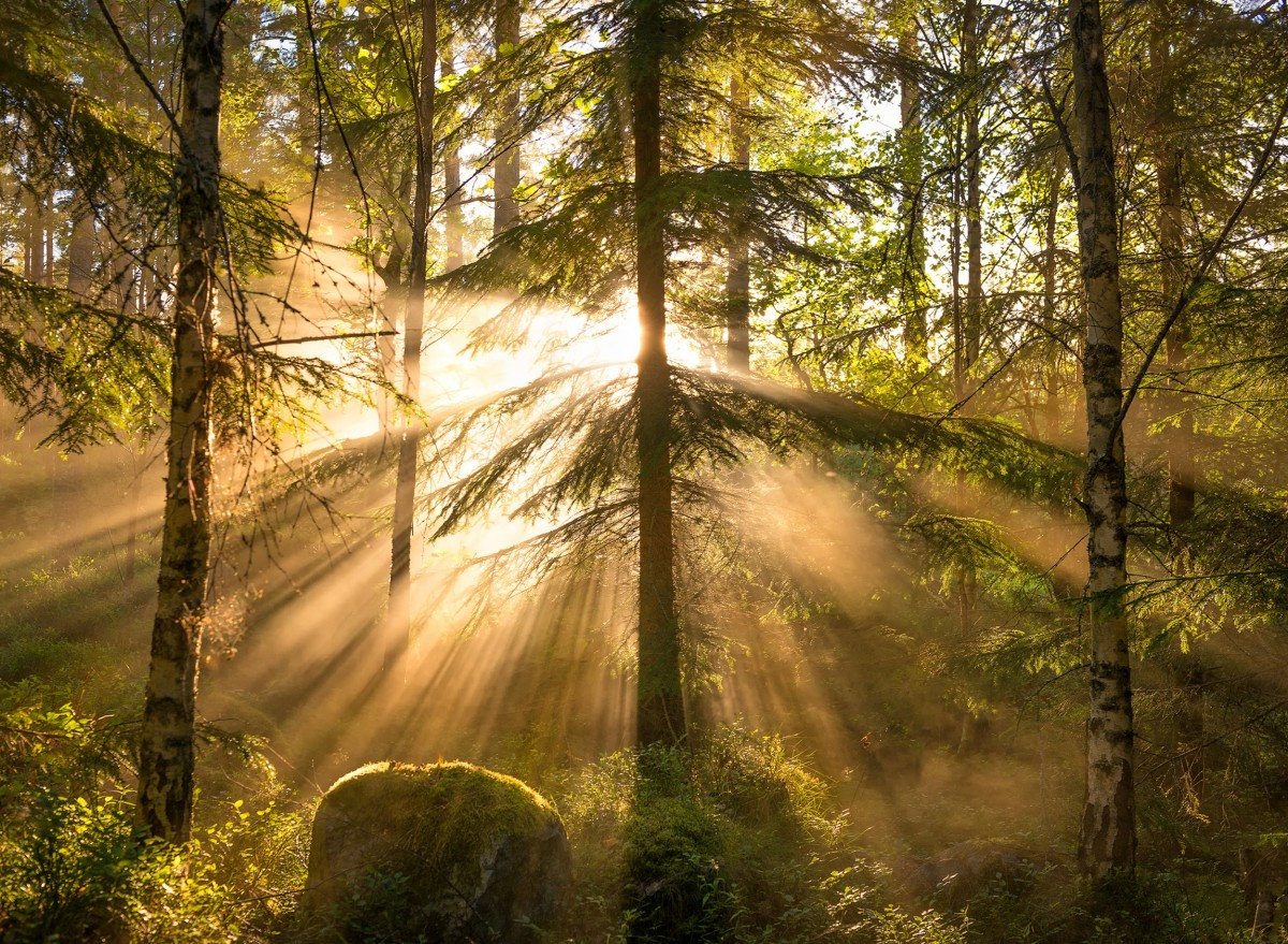 Пазл Собирать пазлы онлайн - Лучи солнца
