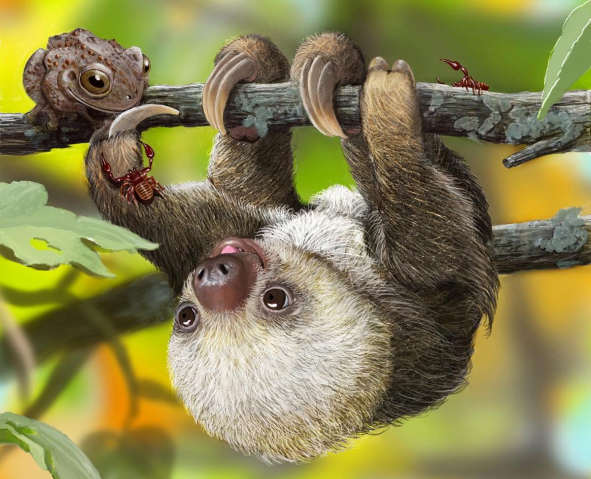 Пазл Собирать пазлы онлайн - Маленький ленивец