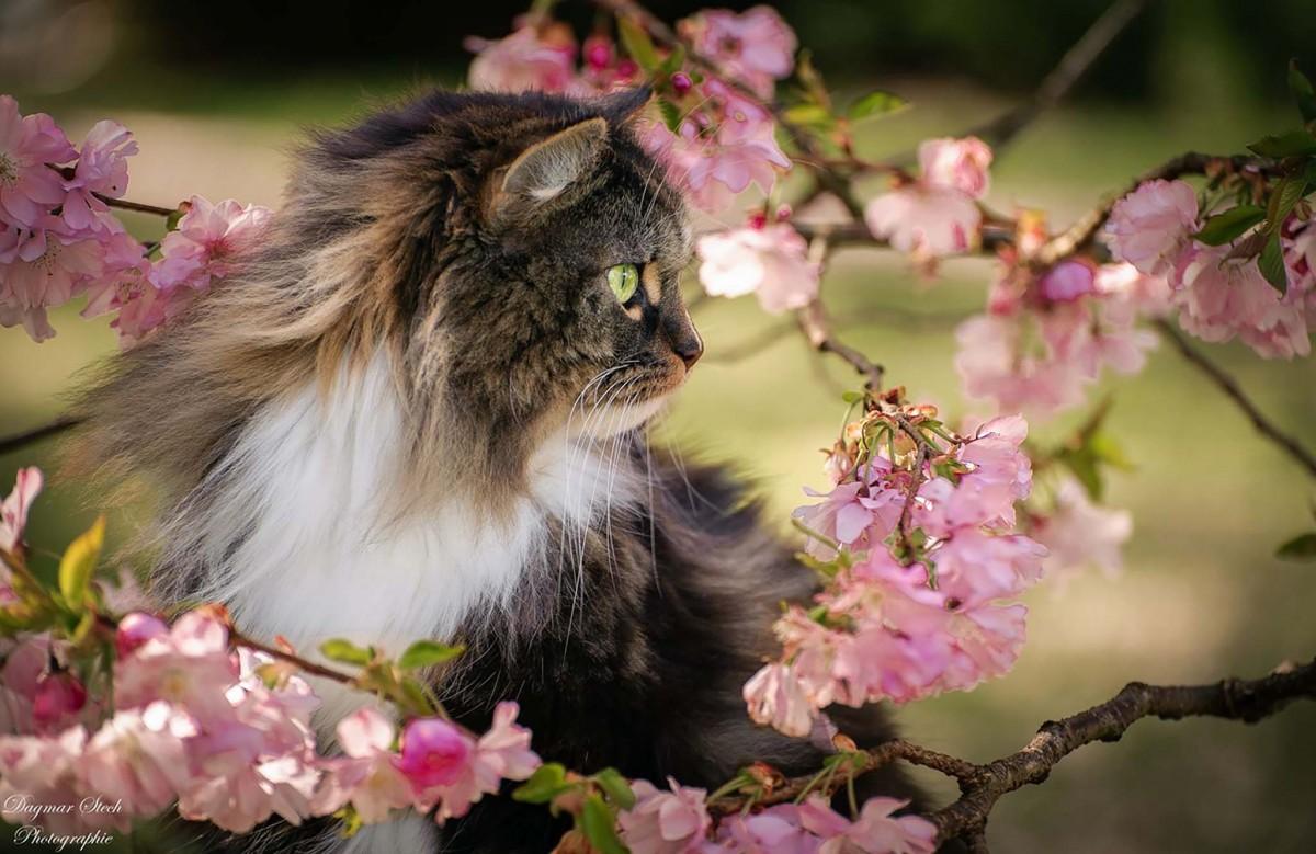 Пазл Собирать пазлы онлайн - Мартовский кот