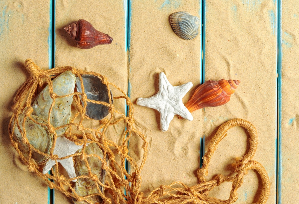 Пазл Собирать пазлы онлайн - Морской натюрморт