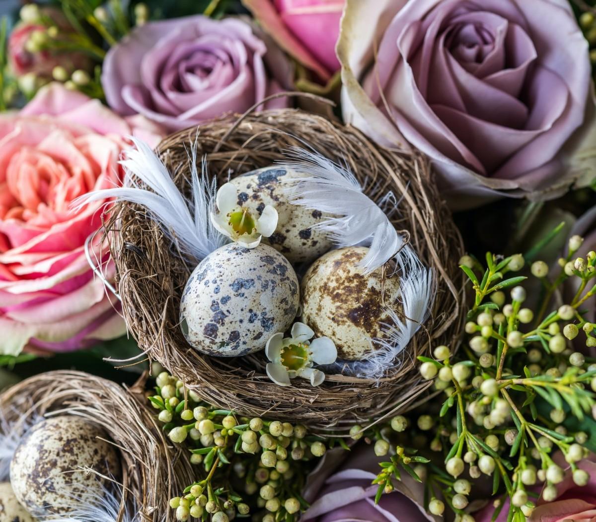 Пазл Собирать пазлы онлайн - Натюрморт с гнездом