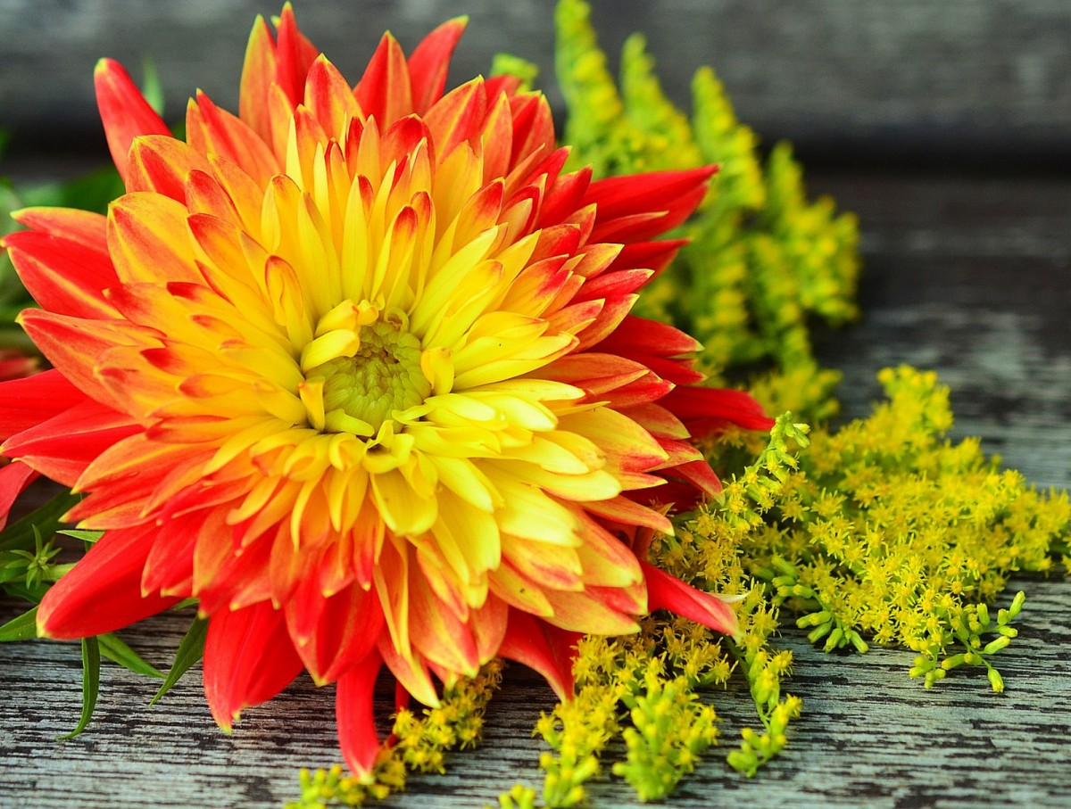 Пазл Собирать пазлы онлайн - Огненный цветок