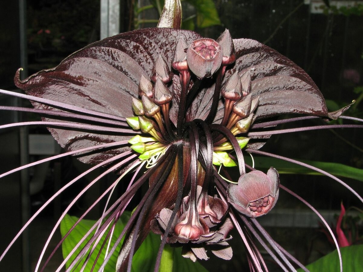 Пазл Собирать пазлы онлайн - Орхидея