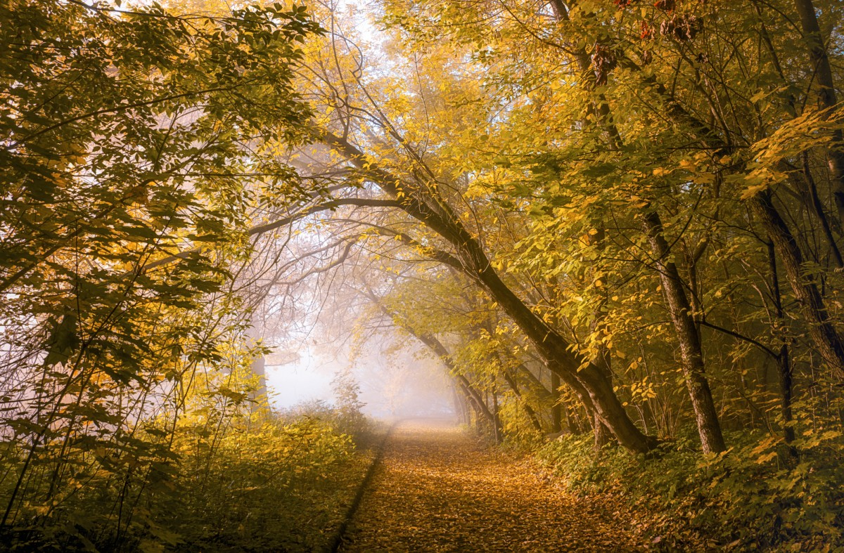 Пазл Собирать пазлы онлайн - Осень и туман
