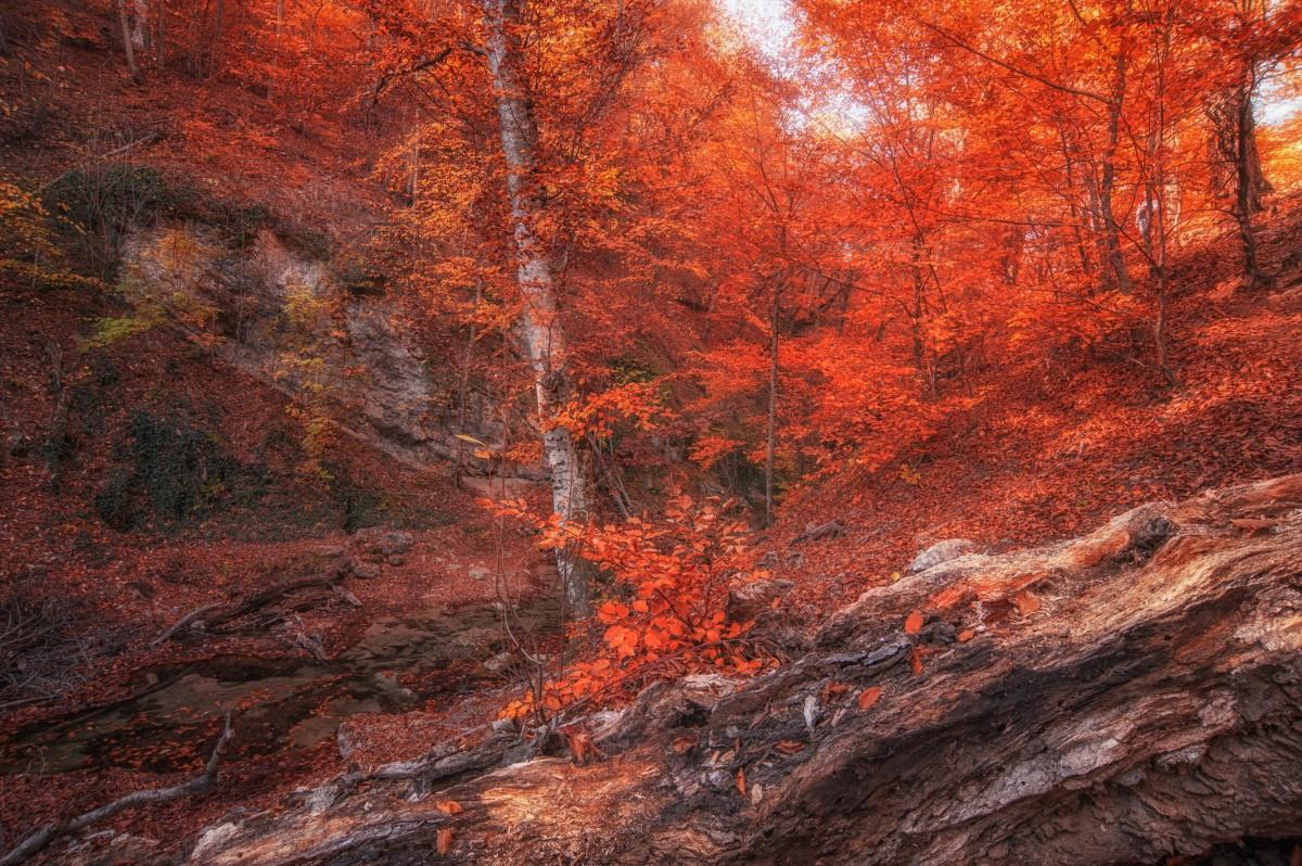 Пазл Собирать пазлы онлайн - Осень красная