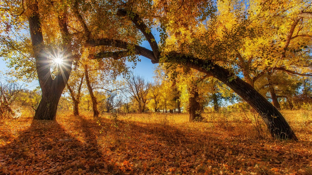 Пазл Собирать пазлы онлайн - Осень в разгаре
