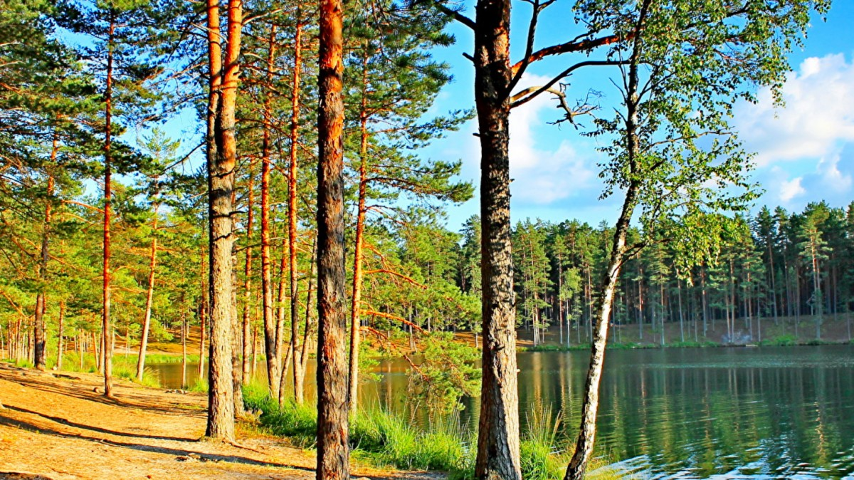 Пазл Собирать пазлы онлайн - Озеро в лесу
