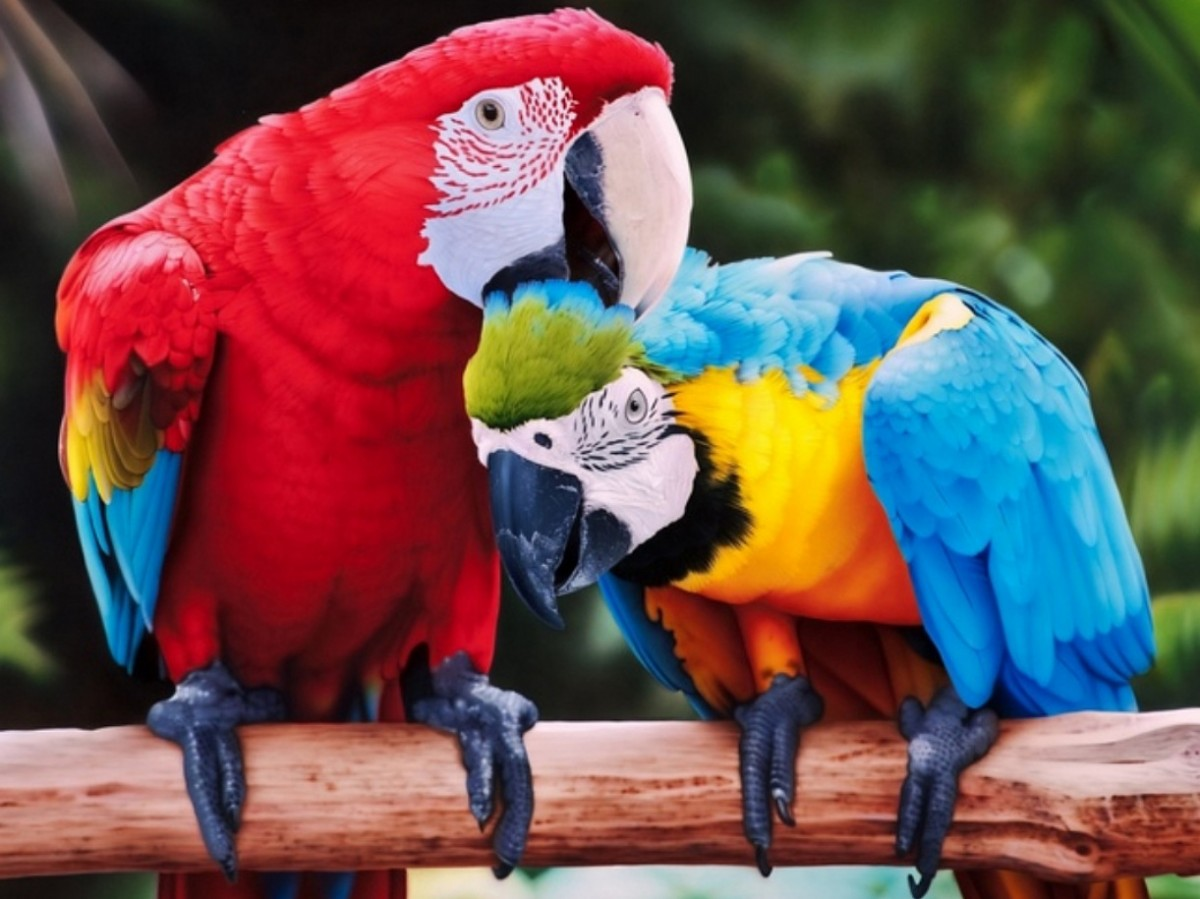 Пазл Собирать пазлы онлайн - Пара попугаев