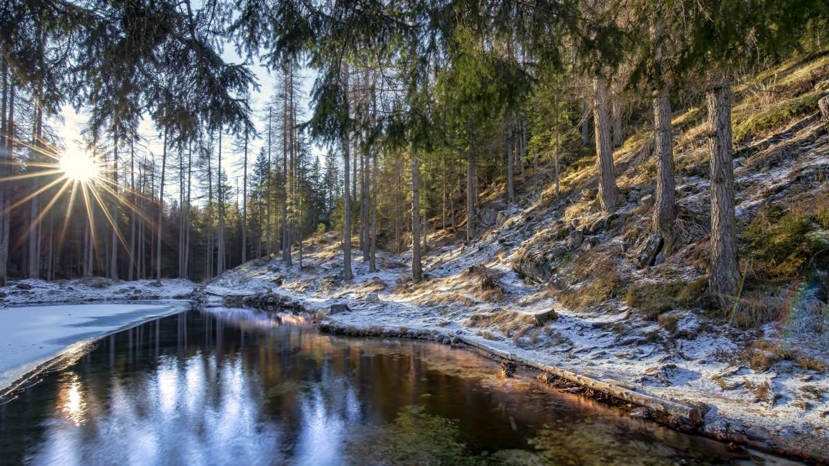 Пазл Собирать пазлы онлайн - Первый снег в лесу